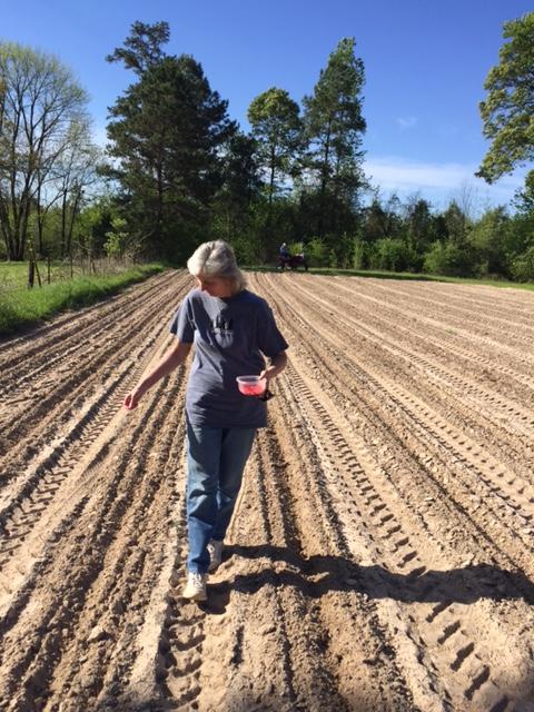 Planting Corn 2016-7